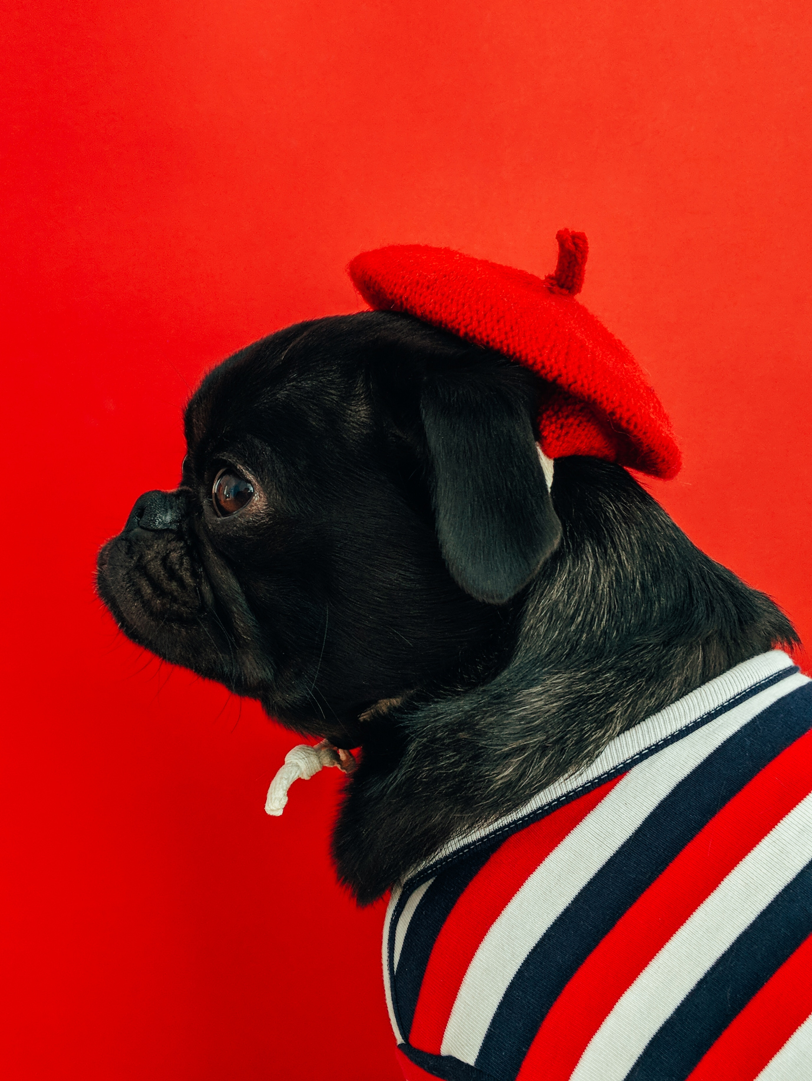 Seven Tips to Keep Your Dog Safe on Fourth of July